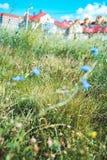 τομέας των wildflowers πέρα από το θολωμένο υπόβαθρο των σπιτιών πόλεων εκλεκτικός μακρο πυροβολισμός εστίασης με ρηχό DOF Στοκ φωτογραφία με δικαίωμα ελεύθερης χρήσης