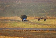 Τομέας φθινοπώρου κατά τη διάρκεια της κοπής χόρτου στοκ φωτογραφία
