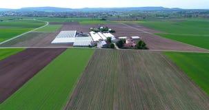 Τομέας φραουλών, ενάντια στο σκηνικό μιας μεγάλης θερμότητας σύνθετης Πτήση πέρα από τη γεωργική ζώνη απόθεμα βίντεο