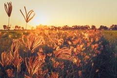 Τομέας χλοών στο ηλιοβασίλεμα στοκ εικόνες