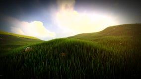 Τομέας χλόης με τους κυλώντας λόφους και τα wildflowers στην Ιρλανδία απόθεμα βίντεο