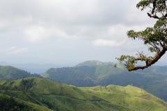 Τομέας χλόης στο βουνό στοκ φωτογραφίες με δικαίωμα ελεύθερης χρήσης