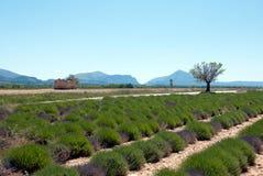 Τομέας lavender Στοκ φωτογραφία με δικαίωμα ελεύθερης χρήσης