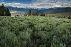 Τομέας Yellowstone Στοκ Εικόνες