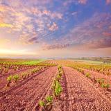 Τομείς αμπελώνων Λα Rioja με τον τρόπο Αγίου James στοκ φωτογραφία