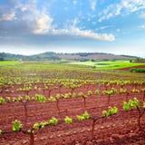 Τομείς αμπελώνων Λα Rioja με τον τρόπο Αγίου James στοκ εικόνα