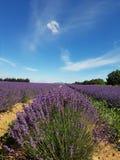 Τομείς Γαλλία Lavendel Στοκ Εικόνες