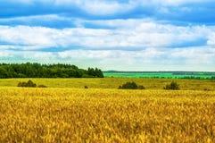 Τομείς, δάση, σύννεφα, φύση και χαλάρωση Στοκ Εικόνες