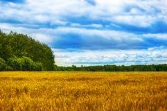 Τομείς, δάση, σύννεφα, φύση και χαλάρωση Στοκ Φωτογραφίες