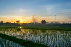 Τομείς και ηλιοβασίλεμα ρυζιού Στοκ Εικόνες