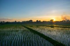 Τομείς και ηλιοβασίλεμα ρυζιού Στοκ Φωτογραφίες