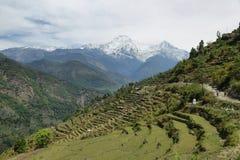 Τομείς και ξύλινα σπίτια στο Νεπάλ Στοκ Εικόνες
