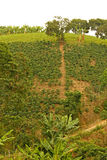 Τομείς και φυτείες καφέ στις κολομβιανές Άνδεις Κολομβία Στοκ Φωτογραφίες