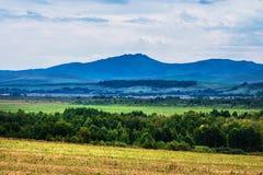 Τομείς καλαμιών στα βουνά Altai στοκ εικόνα
