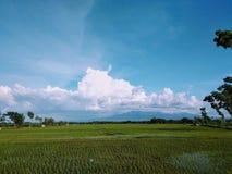 Τομείς Μπαλί ρυζιού στοκ φωτογραφία με δικαίωμα ελεύθερης χρήσης
