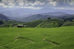 Τομείς ορυζώνα ρυζιού στην Ταϊλάνδη Στοκ Εικόνες