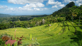 Τομείς ορυζώνα του Μπαλί, Ινδονησία Στοκ φωτογραφία με δικαίωμα ελεύθερης χρήσης