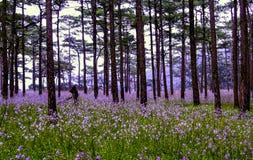 Τομείς λουλουδιών Στοκ Εικόνες