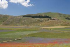 Τομείς λουλουδιών Castelluccio Στοκ Εικόνες