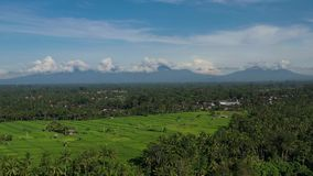 Τομείς ρυζιού με το μήκος σε πόδηα άποψης ηφαιστείων σε μια ηλιόλουστη ημέρα φιλμ μικρού μήκους