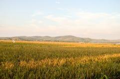 Τομείς ρυζιού με το όμορφο τοπίο Στοκ Εικόνες