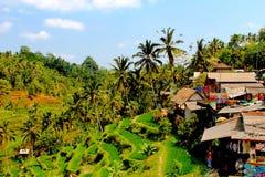 Τομείς ρυζιού - Μπαλί, Ινδονησία Στοκ Φωτογραφία