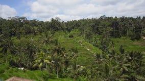 Τομείς ρυζιού πεζουλιών σε Ubud, Μπαλί, Ινδονησία Στοκ εικόνα με δικαίωμα ελεύθερης χρήσης