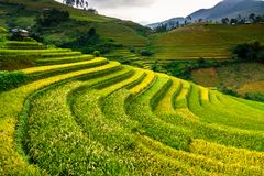 Τομείς ρυζιού πεζουλιών στο βουνό στα βορειοδυτικά του Βιετνάμ Στοκ Εικόνες