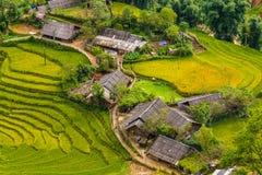 Τομείς ρυζιού σε ένα χωριό Στοκ εικόνα με δικαίωμα ελεύθερης χρήσης