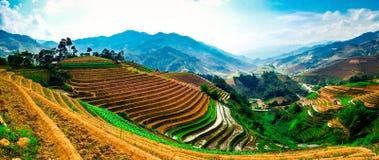 Τομείς ρυζιού στα πεζούλια στη φύτευση στο Βιετνάμ Στοκ εικόνα με δικαίωμα ελεύθερης χρήσης