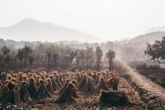 Τομείς ρυζιού στην επαρχία στοκ φωτογραφία