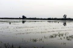 Τομείς ρυζιού στην Ισπανία στοκ φωτογραφία με δικαίωμα ελεύθερης χρήσης