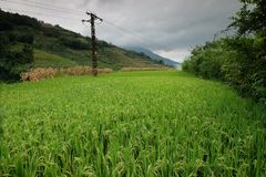 Τομείς ρυζιού στη βόρεια Κίνα, ζαλίζοντας σκηνικά δ Υ Στοκ Φωτογραφίες