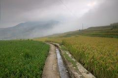 Τομείς ρυζιού στη βόρεια Κίνα, ζαλίζοντας σκηνικά δ Υ Στοκ Φωτογραφία