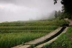 Τομείς ρυζιού στη βόρεια Κίνα, ζαλίζοντας σκηνικά δ Υ Στοκ Εικόνες