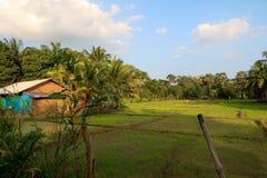 Τομείς ρυζιού στη Σρι Λάνκα στοκ φωτογραφία