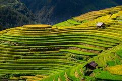 Τομείς ρυζιού στο πεζούλι στη περίοδο βροχών στη MU Cang Chai, γεν Bai στοκ εικόνα με δικαίωμα ελεύθερης χρήσης