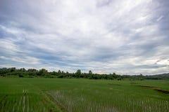 Τομείς ρυζιού της Ταϊλάνδης Στοκ φωτογραφία με δικαίωμα ελεύθερης χρήσης