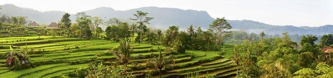 Τομείς ρυζιού του Μπαλί στοκ φωτογραφία