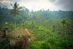 Τομείς ρυζιού του πεζουλιού Tegalalang στοκ φωτογραφίες