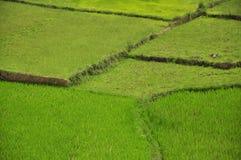 Τομείς ρυζιού Στοκ Εικόνα