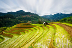 Τομείς ρυζιού terraced στο ηλιοβασίλεμα στη MU Cang Chai, γεν Bai, Βιετνάμ Στοκ Εικόνες