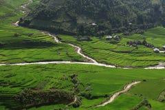 Τομείς ρυζιού terraced του TU LE, YenBai, Βιετνάμ Στοκ Εικόνες