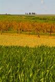 Τομείς σίτου, Apulia, Ιταλία στοκ φωτογραφία