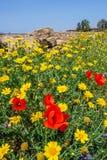 Τομείς την άνοιξη στη Κύπρο Στοκ Εικόνα