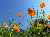 Τομείς της Φλαμανδικής περιοχής με τον ήλιο, όμορφα λουλούδια στοκ εικόνες