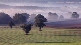 Τομείς της Misty της βρετανικής επαρχίας στο φθινόπωρο απόθεμα βίντεο