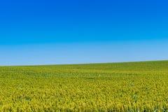 Τομείς του Κάνσας του σιταριού και του ουρανού Στοκ εικόνα με δικαίωμα ελεύθερης χρήσης