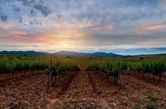 Τομείς των αμπελώνων στο ηλιοβασίλεμα σε Cariñena, Aragà ³ ν, Ισπανία Στοκ εικόνα με δικαίωμα ελεύθερης χρήσης