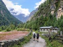 Τομείς χωριών και φαγόπυρου Talekhu, Νεπάλ Στοκ φωτογραφία με δικαίωμα ελεύθερης χρήσης
